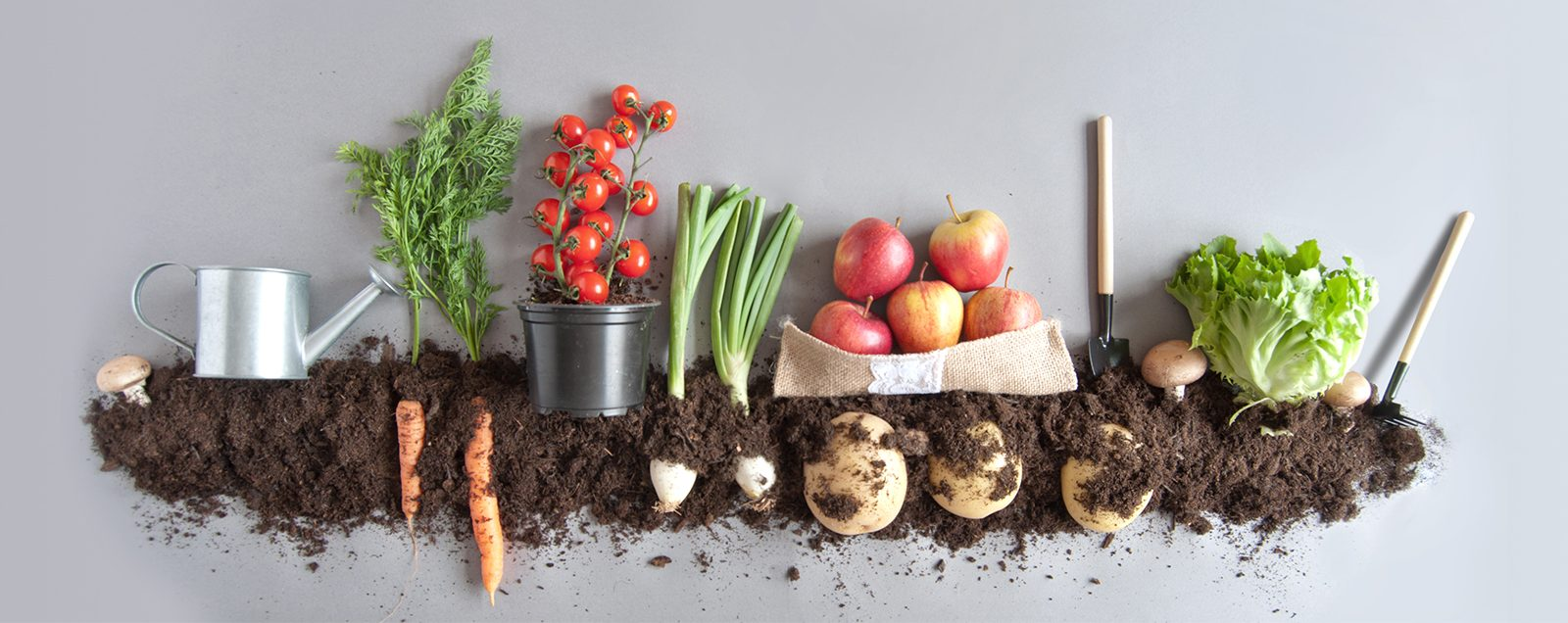 The image shows vegetables growing above and below soil with some garden tools