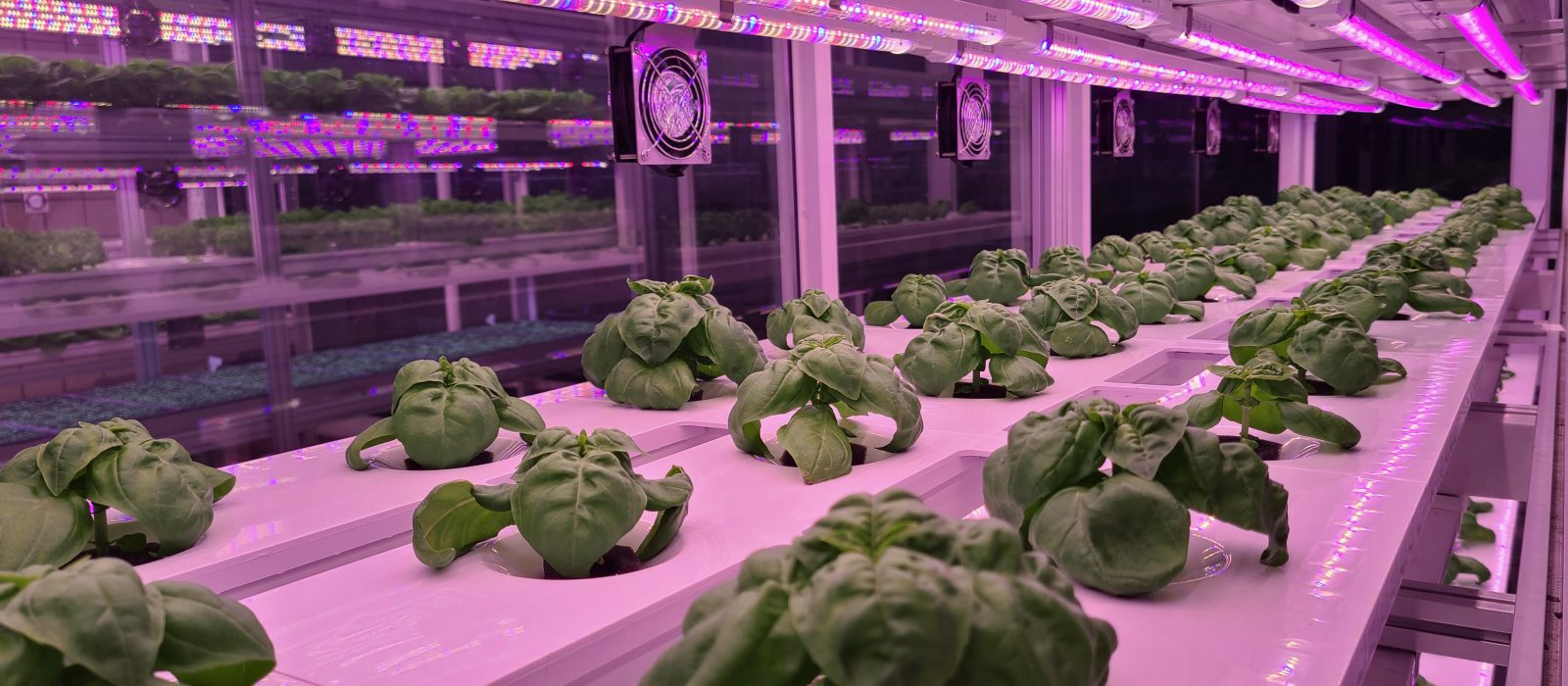 Image of an indoor vertical farm with plants growing under special lighting